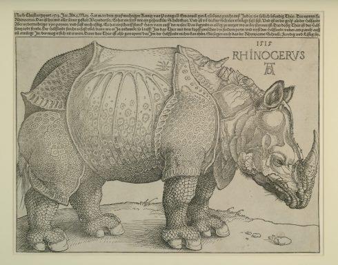 Albrecht Dürers nesehorn fra år 1515, Germanisches Nationalmuseum, Nürnberg, Bayern, Unesco Verdensarv, Altstadt, Historisk, Middelalder, Marktplatz, Sør-Tyskland, Tyskland