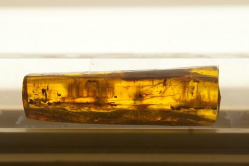 Amber museum, ravmuseet, Katedralplassen, Pilies, Markedsplassen, Vilnius, historisk, gamleby, Unesco Verdensarven, Lithauen, Baltikum