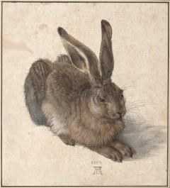 Albertina Museum, Albrecht Dürer, Hare, Wien, Innere Stadt, Unescos liste over Verdensarven, Ober- Nieder-Österreich og Wien, Østerrike