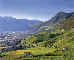 Vinmarkene Santa Magdalena, Bolzano, Bozen, Alto Adige, Tyrol, Süd-Tirol, Nord-Italia, Italia
