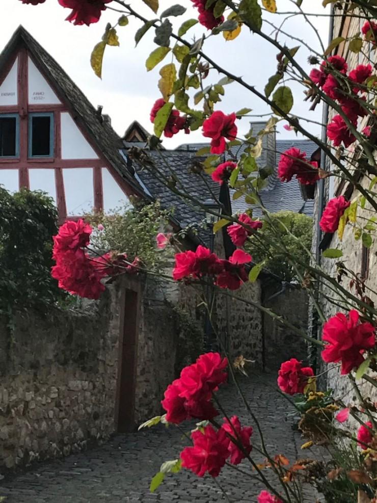 Røde roser ved trappene ned fra Schloss og Domplatz. Foto: © ReisDit.no
